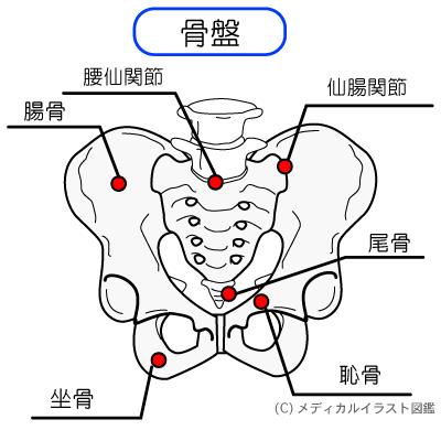 仙腸関節のイラスト